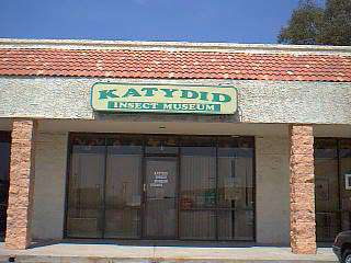 Katydid Insect Museum