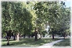 Linnea Park