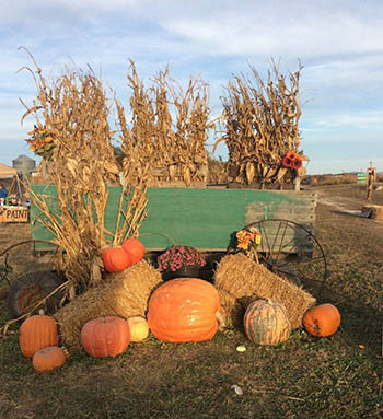 Hunter's Pumpkin Farm