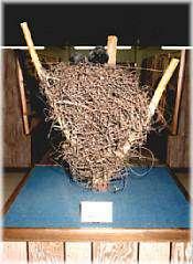 Raven's nest