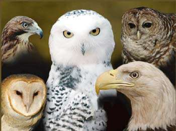 Eagle Valley Raptor Center