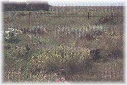 LASR - Ulysses, Kansas - Wagon Bed Springs