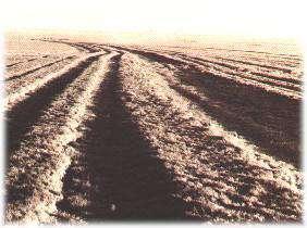 LASR - Lakin, Kansas - Charlie's Ruts