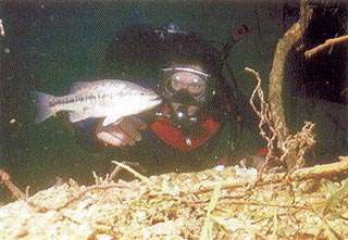 Stockton Lake Scuba Diving