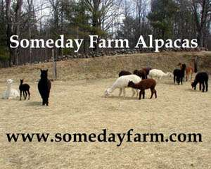 Someday Farm Alpacas
