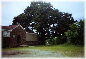 Largest Oak Tree