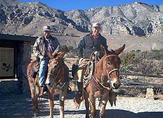 Guadalupe Mountains Equine Trails