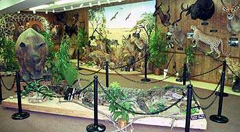 Preston Kyle Shatto Wildlife Museum