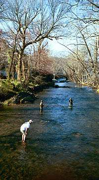 Annual Trout Tournament