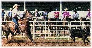 Ben Johnson Steer Roping Contest